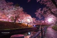 『夜桜散歩*』 - ココロハレ*