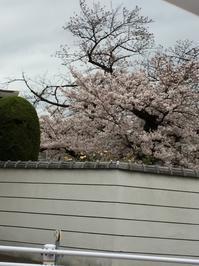 桜 - 着付師 時々ハンドメイド