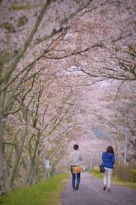 桜堤 - 片眼を閉じて見る世界には・・・。