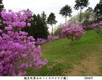 越生町黒山の「三つ葉躑躅園」へ - 比企の郷 月輪紀行