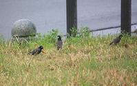 今日の鳥さん 170417 - 万願寺通信