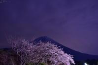 田貫湖の夜桜 - 風とこだま