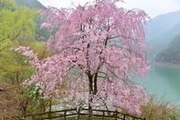 雨にけむる水源地の村  川上村 - 峰さんの山あるき