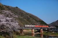 """定番アングルで""""桜とDC""""。 - 山陽路を往く列車たち"""