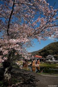 桜とノス色。 - 山陽路を往く列車たち