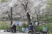 「春を描く」 - hal@kyoto
