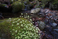 春の渓流と林道 - 蝶と蜻蛉の撮影日記