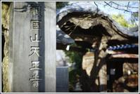 谷根千 -83 - Camellia-shige Gallery 2