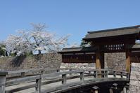 桜 vs ライトグレー三銃士 その1 - Jester's Pictures