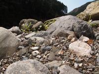 徳島方面遠征 スギタニルリシジミの吸水 Byヒナ - 仲良し夫婦DE生き物ブログ