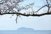 お花見日記 2017 - ゲ ジ デ ジ 通 信