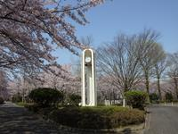 『朝倉運動公園の花散策~』 - 自然風の自然風だより