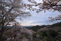 3度目の吉野山 それなりに撮影は楽しんだ・・・ - ratoの大和路