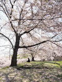 グリーンパークの桜 1 - Y*s ROOM