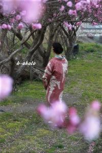 写真遊び   着物遊び   梅の頃 - 今が一番