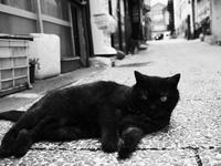 路地の住人 - 節操のない写真館