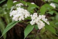 穀雨(4/20~5/4)のころ咲く花 - 宮迫の! ようこそヤマボウシの森へ