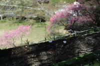 葉桜の季節 - ぴんの助でございます