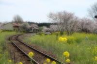 桜花につつまれて・・・上総鶴舞駅 - aya's photo