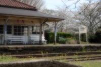 続・桜花につつまれて・・・上総鶴舞駅 - aya's photo