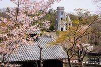 春 明治村 - え~えふ写真館