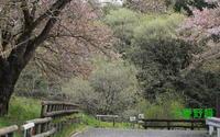 2017年04月17日 狭山丘陵だより  ミヤマセセリ - 愛野緑の撮影記録