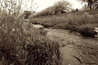 春の小川は - summicron