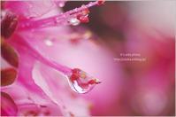 雨の日のプレゼント♪ - It's only photo