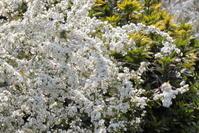 嬉しい季節♪ - お花畑で微笑んで**