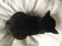 久しぶりのみーちゃんの生声 - がんばる猫
