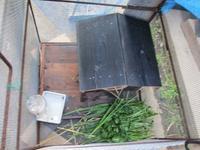 あっと言う間に ウサギ小屋を建てた - 島暮らしのケセラセラ