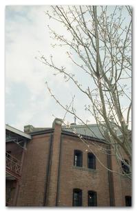 #2162 桜が咲き始めた頃に - at the port