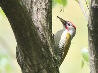 夏日の里山 - TACOSの野鳥日記