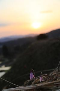 燃える空とカタクリと - A primrose by the river's brim