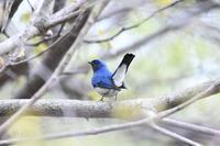 天気回復  探鳥に出る - いい男の「歩々是道場」