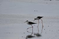 天満大池の野鳥 - いい男の「歩々是道場」