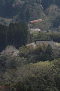 新緑と桜の房総 - 2017年桜・小湊鉄道 - - ねこの撮った汽車