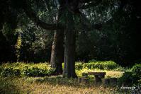 ☆ 樹下のテーブル ☆ - Trimming