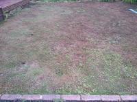 雨上がりのクラピア - うちの庭の備忘録 green's garden
