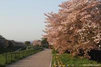 桜吹雪 - 虫籠物語