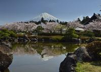 大石寺 - 富士山に夢中
