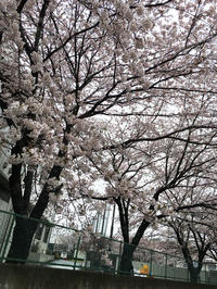 HIGH SUMMERに向けて - OG Classix Official Blog