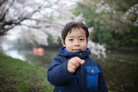 雨の中の福岡堰桜 - Full of LIFE