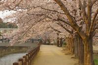 姫路城の桜(2017/4/5) 其の① - 南の気ままな写真日記