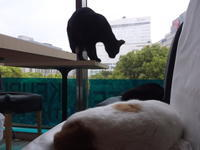 杉村春子の「怪談牡丹灯籠」 - シェークスピアの猫
