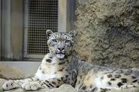「ミルチャ」はのんびりと - 動物園放浪記