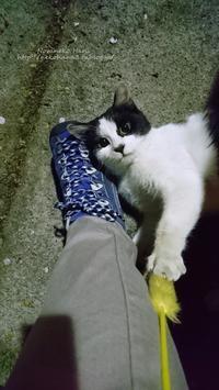 警戒しつつ甘えたにゃ~、遊びたいお年頃 - 猫花雑記