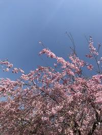 青い空を見て思うこと・・平和 - ドイツ語のある暮らし