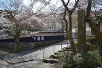 太平記を歩く。 その43 「道誉桜(清瀧寺徳源院)」 滋賀県米原市 - 坂の上のサインボード