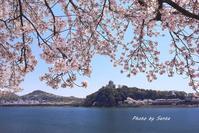桜紀行2017東海版-続々編- - さんたの富士山と癒しの射心館
